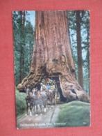 California  Sequoia Tree Wawona Horse Cart Driving Thru  Ref 3632 - Trees