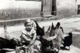 Photo Originale Ferme Et Très Jeune Volailler Nourrissant Ses Poules & Coqs à La Basse-cour Pour élevage De Volailles - Métiers