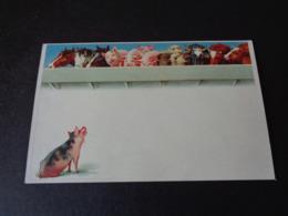 Cochon ( 94 )   Varken  Zwijn - Varkens