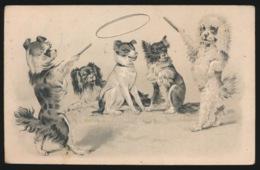 5 CIRCUS HONDEN  RELIEF  GAUFRE - Honden