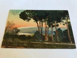 Lebanon Sannin Bey Seen Through A Pine Grove Advertisement On Back 11218 Post Card Postkarte POSTCARD - Lebanon
