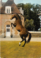 Le Pin Au Haras Canton Exmes Cheval - Frankreich