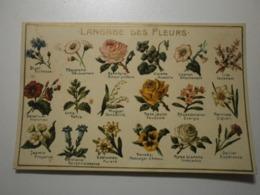 Langage Des Fleurs (A6p48) - Blumen