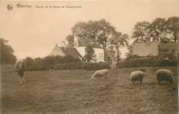 Belgique - Waterloo - Prairie De La Ferme De Hougoumont - Waterloo