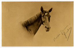 Pferd ( IV ) - Cavalli