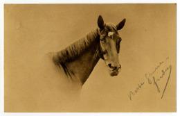 Pferd ( IV ) - Caballos