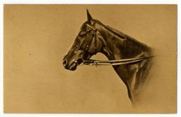 Pferd ( V ) - Caballos