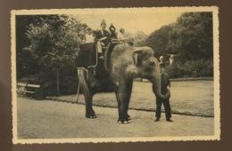 Voyage Sur Le Dos D'un éléphant Au ZOO D'ANVERS  Postée En 1937 - Antwerpen