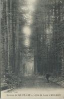 Allee De Sapins à Belroy Environs De Bar Sur Aube Librairie Valck Carte Animee Homme 1921 - France