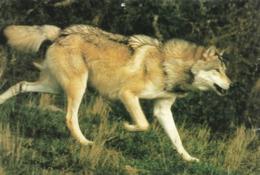 Sainte Lucie Lozère Les Loups Du Gévaudan (2 Scans) - Dieren