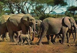 Faune Africaine Éléphants (2 Scans) - Olifanten