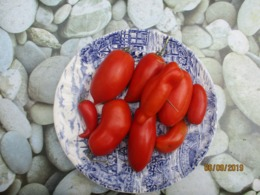 25 Graines De Tomate Andine Cornue Des Andres Cultiver En Serre Et Pleine Terre Sans Bouillie Bordelaise - 2. Samenkörner