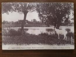 SAINT OMER Pas De Calais,Marais à Clairmarais Chèvre Goat. Bombardement Dunkerque Troupes Anglaises Lord Kitchener 1915 - Saint Omer