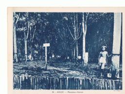 Viet Nam  Maxi Carte 240x180 Auloc Plantations D  Heveas  Mx04 - Viêt-Nam