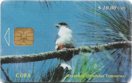Cuba - Etecsa - Tocororo Bird (Priotelus Temnurus) - 01.1997, 40.000ex, 10$, Used - Cuba