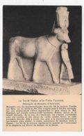 MEMPHIS - LA VACHE HATHOR ET LE PRETRE PSAMETIK - SAKKARAH - CPA NON VOYAGEE - Egypte