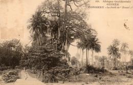 Guinée. CPA. KONAKRY.  La Forêt De Toumbo.  1924. - Guinée Française