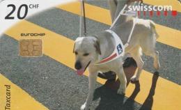 SUIZA. Perros - Dogs. Enzo. 7/98. SUI-CP-39A. (104) - Perros