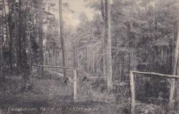 AK Gumbinnen - Partie In Fichtenwalde - 1907 (43560) - Ostpreussen