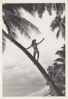 Océanie - Tahiti - Photo Gian Paolo Barbieri - Tatouage - Homme Sur Un Cocotier - Tahiti