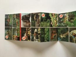 Bellewaerde - Zillebeke -  Parc D'atttractions. Safari... Zoo - Carnet Complet De 10 Cartes Port - Ieper