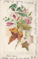 AK Weinreben - Die Freundschaft Ist Wie Guter Starker Wein - Künstlerkarte - Fahrenkrug Nach Kiel - 1901 (43571) - Botanik