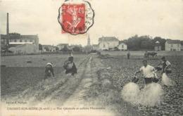 CROISSY SUR SEINE - Vue Générale Et Cultures Maraichères. - Croissy-sur-Seine
