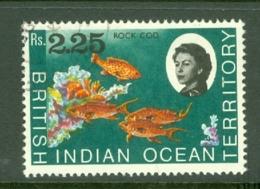 British Indian Territory (BIOT): 1968/70   QE II - Marine Life   SG27    R2.25   Used - British Indian Ocean Territory (BIOT)