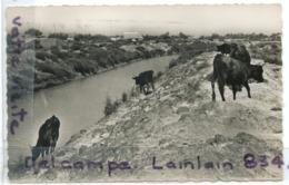 - 25 - Stes MARIES De La MER - Taureaux De Camargue, écrite, 1957, Peu Courante, Petit Format, BE, Scans. - Saintes Maries De La Mer