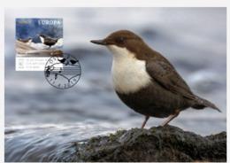 Norway 2019 MC Maximum Card White-throated Dipper Norway's National Bird Birds Oiseau Oiseaux - Uccelli