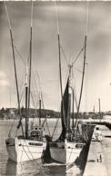 Morgat.......les Thoniers  Au Port   Edit  Abeille   No.401 - Morgat