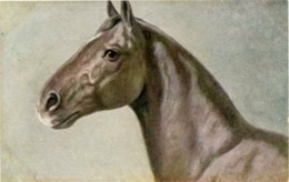 Animals, Horses, Pferde, Konie, Cheval, Cavalli, - Cavalli