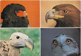 CPM/CPSM -  VILLARS LES DOMBES - Parc Ornithologique Départemental De La Dombes - Villars-les-Dombes