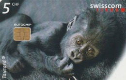 SUIZA. King Kong Junior (Gorilla At The Zurich Zoo). 6/99. SUI-CP-58. (197) - Tarjetas Telefónicas