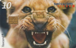 SUIZA. Baring Her Teeth (Lion At The Al Maglio Zoo). 6/99. SUI-CP-59. (198) - Tarjetas Telefónicas