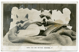 DOGS WITH SUNGLASSES IN BED WITH WATER BOTTLE : HOPE YOU ARE BETTER, DOGGONE IT - Dogs