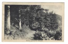 896 - DINTORNI DELL' HOTEL COLLINA - COLLINA PISTOIESE - FRATELLI SIGNORINI FU STEFANO - 1920 CIRCA PISTOIA - Pistoia