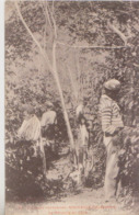 CPA LA RECOLTE DU CAFE  NOUVELLES CALEDONIES - Nouvelle-Calédonie