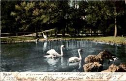 Basel - Zoolog. Garten - Schwanenteich (1205) * 13. 6. 1905 - BS Bâle-Ville