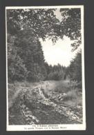 L'Ardenne Pittoresque - La Grande Vecquée Vers La Baraque Michel - Jalhay