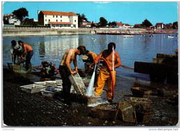44 LA BERNERIE EN RETZ - Le Lavage Des Huitres Dans Le Port - La Bernerie-en-Retz
