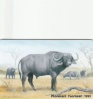 South Africa - The Big Five - Buffalo - South Africa
