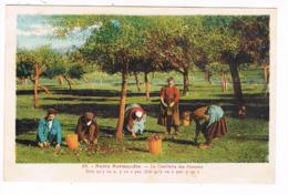 CP.(14) Notre Normandie.Cueillette Des Pommes (E.486) - France