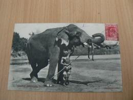 CP 97 / SRI LANKA CEYLON /  CEYLON ELEPHANTS / CARTE VOYAGEE / 2 SCANS - Sri Lanka (Ceylon)