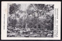 Souvenir Du Guatemala, élevage De Bétail - Rare !! Cattle Breeding - Travelled 1913 - Guatemala