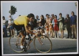 EDDY MERCKX Cyclisme Bicycle Fiets Vélo Tour De France MOLTENI Wielrennen Cycling Race - Cyclisme