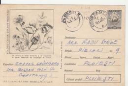 82541- CHAMOMILE, HIP ROSE, POPPY, MEDICINAL PLANTS, POSTCARD STATIONERY, 1964, ROMANIA - Medicinal Plants