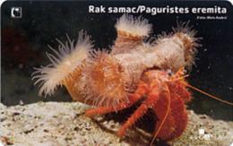 MOST BEAUTIFULL PHONECARD IN THE WORLD 2004.*** PAGURISTES EREMITA ( Croatia ) - Crab - Crabe - Krabbe - Cangrejo - Kroatien