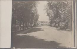 Photographie - Carte-photo - Allée Avenue Villas Châlets - Lieu à Situer - Fotografía