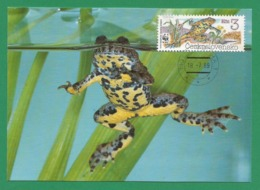 Ceskoslovensko  1989 , Yellow-bellied Toad (Gelbbauchunke) - WWF Official Maximum Card First Day - PRAHA 18-7-1989 - Tschechoslowakei/CSSR